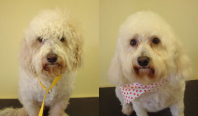 Nina before and afer her groom at Grooms by Beth