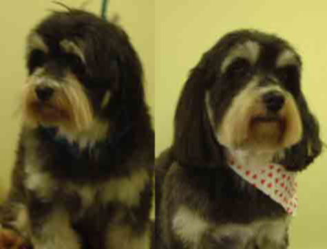 tank before and after his groom at Grooms by Beth